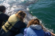Eloise (right) pets a Grey Whale