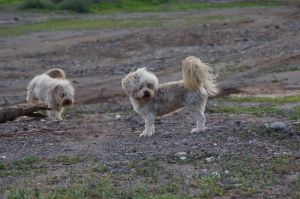 Buster & Blondie