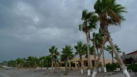 Palms Sway