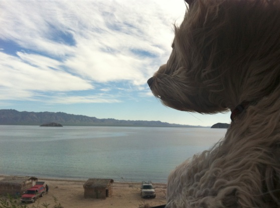 Buster Checks out the Sea of Cortez