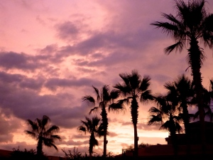 Palms against the Evening Sky