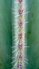 Spines