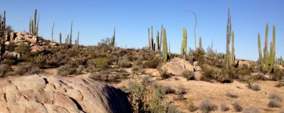 desert2